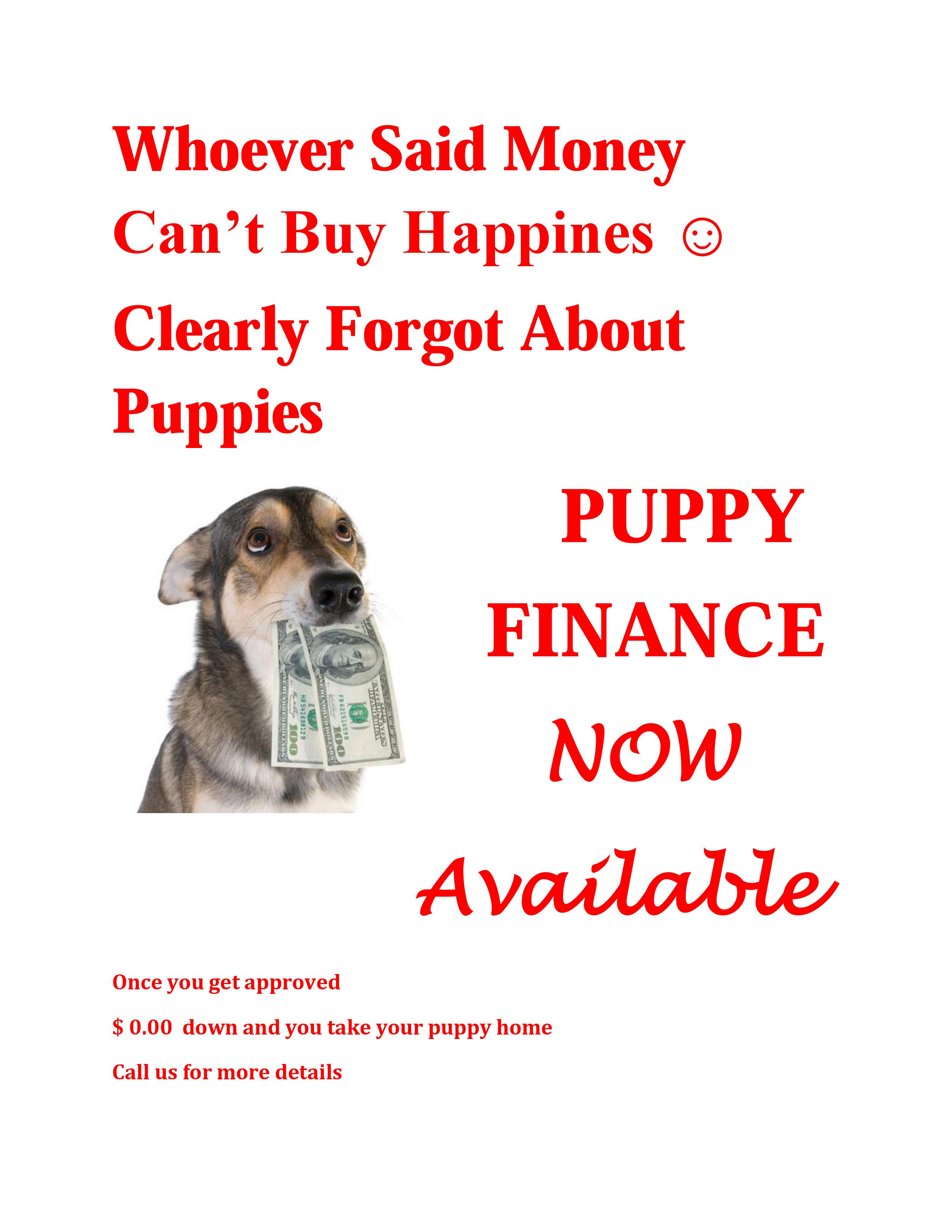 Puppy Finance | Queens Puppies and more